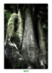 THE FINGERS / LES DOIGTS (régisa) Tags: finger doigt main hand arbre tree analogy analogie arbracadabra forêt desvres cépée hêtre beech
