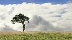 Priddy Tree (Doyleecart Photography) Tags: priddy somerset landscape ngc cloud sky tree green white image canon 5dmkiv doyleecart westcountry england uk europe icon unlimitedphotos