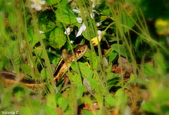 Even snakes like to smell the flowers:) (Yolanta Z) Tags: snake
