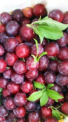 Methley plums (JoelDeluxe) Tags: methley plums red plum fruit deluxevalleyorchard southvalley newmexico nm joeldeluxe