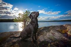 Nova 1 (Jonas von Hofsten) Tags: canon 5dmkii 1740 580exii strobist dog water coast labrador animal