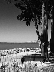 Bench with Tree and View. (melystu) Tags: marine view ca park harbor bay tree bench hbm