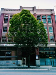 #LGG6 Big tree, downtown. (thnewblack) Tags: lgg6 lg g6 android smartphone cameraphone outdoors architecture vancouver britishcolumbia city 13mp vsco hdr