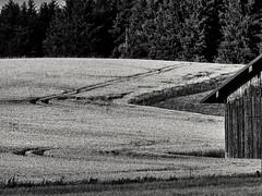 Spuren im Weizen (monochrom) (Helmut Reichelt) Tags: bw sw spuren weizen weizenfeld feld juli sommer schwaigwall geretsried bayern bavaria deutschland germany panasonic lumix fz200 captureone10 silverefexpro2