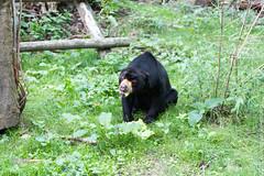IMG_0568.jpg (wfvanvalkenburg) Tags: ouwehandsdierenpark malaysianbeer beer familie