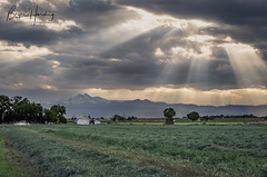 """Rays""ing Crops - Weld County, Colorado (www.rootsstudiophoto.com) Tags: rays crops farm frontrange longspeak rockymountains mead weldcounty alfalfa ranch agriculture foothills coloradophotography coloradolandscapephotography farmphotography frontrangephotography landscape"