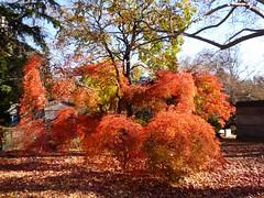 P1060683 (amiterangi1) Tags: woodlawncemetery autumn cemetery woodlawn