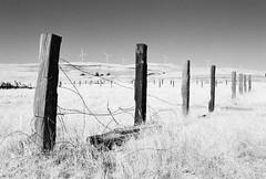 Greenville Road (Wayne-K) Tags: bw california film greenvilleroad hoyaredfilter ilford ilfordxp2super400 livermore nikon nikon35mmf2ais nikonfm2 windpower windmills