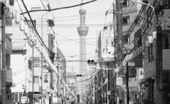 1706017_SRT101_003p (Matsui Hiroyuki) Tags: minoltasrt101 minoltamctelerokkorpf100mmf25 fujifilmneopan100acros epsongtx8203200dpi