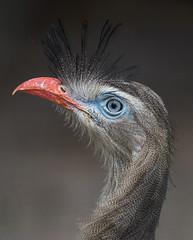 Birdhead (Robert Ron Grove 2) Tags: portrait bird robertgrove head