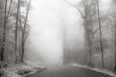 Mohawk State Forest (Photography by Lazlo) Tags: ifttt 500px mist landscape fog cold road wood monochrome weather haze no person forest tree mohawk flickr state
