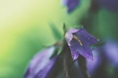nope (christian mu) Tags: flowers bokeh nature summer germany muenster münster botanicalgarden botanischergarten christianmu sonya7ii sony 9028g 9028 90mm macro schlossgarten