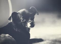 Rev (BluAlien) Tags: 50mm 14 matte dog portrait nikon d800 pet animal cute