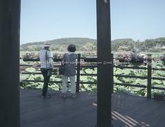 목포 여행 (visualstorymaker) Tags: mom mokpo korea travel family summer 연꽃 여행 lotus 목포 전라남도 엄마 가족 한국 여름 vacation 휴가 tavel