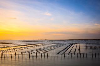 潟湖的夕色(Oyster fields sunset)。
