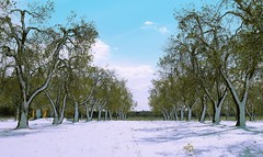 Anomaly. (Roma Federico) Tags: snow southitaly anomaly