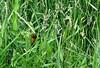 Tangled Mess (Sandy*S) Tags: nebraska sandhills butterfly monarch grasses ansh80 scavenger7