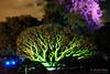 20170531-40-VIvid Light display at Sydney Botanic Gardens (Roger T Wong) Tags: 2017 australia nsw newsouthwales rogertwong sel2470z sony2470 sonya7ii sonyalpha7ii sonyfe2470mmf4zaosscarlzeissvariotessart sonyilce7m2 sydney sydneybotanicalgardens vivid festival illuminated lights night tree