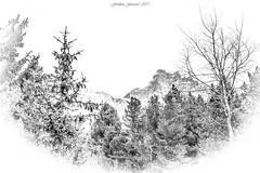 Songe de Cimes (Frédéric Fossard) Tags: noiretblanc esquisse montagne arbre nature paysage sapin cimes art surréaliste abstrait alpes savoie vanoise tarentaise aiguilledufruit texture fondblanc pommedepin branches forêt blackwhitepassionaward