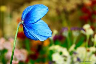 Beautiful Blue !