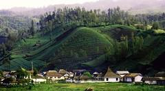 Ranu Pani, Tergoda Cantiknya Desa di Kaki Semeru (BiarTau.com) Tags: cantiknya desa di gayahidup kaki lifestyle pani ranu semeru tergoda