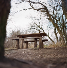 Forest atmosphere (Boldizsar Nadi) Tags: bench forest trees spring bald season dof wood timber pentacon six carl zeiss jena biometar atmosphere empty kodak portra 400 120mm medium format f28 80mm roll scan scanned analogcamera analogphotography analog analogue filmphotography filmisnotdead filmcamera filmgrain film negative negativecamera negativephotography 6x6 celluloid grain