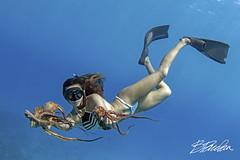 One mermaid, two tako. (bodiver) Tags: hawaii kailua kona blue ocean wideangle ambientlight tokina1017mm octopus fins freediving freedivers apnea