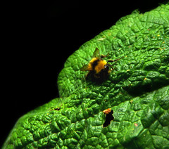 Crawling Close-up (harrysmall07) Tags: ifttt 500px yellow spring color nature closeup colour leaf animal green insect black garden bee wildlife flora close up colorful outdoors bug growth environment biology springtime invertebrate desktop crawl buzz landed no person