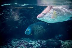 Fische (SK snapshots) Tags: aquarium berlin berlinerzoo zoo unterwasserwelt wateranimals sksnapshots nikon d750 fish fische