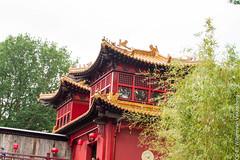 IMG_0425.jpg (wfvanvalkenburg) Tags: ouwehandsdierenpark panda familie