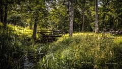 _61A4209.jpg (fotolasse) Tags: stenfors natur nature sweden sverige småland kronoberg å vatten water river bäck sten grönt green canon hdr 16x9 tingsryd