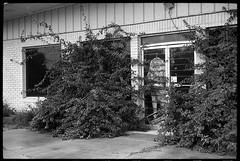Closed and overgrown (FreezerOfPhotons) Tags: cosinavoigtlanderbessar3m kmzjupiter350mmf15 sovieteralens ultrafineextreme400 xtol closed closedbusiness overgrown metal glass shrubbery pavement