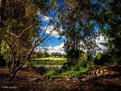 VIEW ACROSS THE RIVER #2 (len.austin) Tags: australia australianplants brisbane figtreepocket landscape outdoor queensland