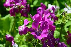 (Sandra Király Pictures) Tags: flowers flower spring nature outdoor botanicalgarden ogródbotaniczny warsaw warszawa poland polska