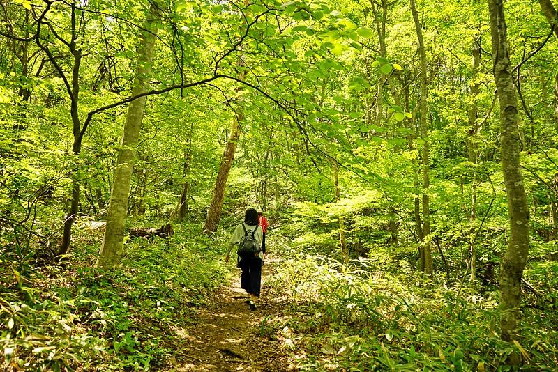 登山健行為了一睹高柴山杜鵑花之美(2)