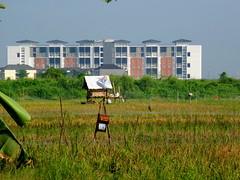 Urbanisasi (Everyone Sinks Starco (using album)) Tags: surabaya eastjava jawatimur sawah ricefields urbanisation urbanization urbanisasi