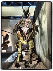 Sarah (1elf12) Tags: braunschweig staatlichesnaturhistorischesmuseum sonderausstellung jurassicharzdinosauriervomharzbiswyoming hamburgerstrase germany deutschland stegosaurier stegosaurus sarah skelett gerippe fossilien skeleton dinosaurier dinosaur