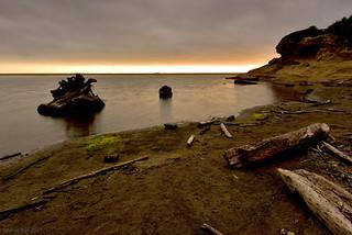 Drifting woods|San Gregorio Beach, CA