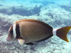Hanauma Bay 17 (venusnep) Tags: hanaumabay hanauma bay underwater tropicalfish tropical fish iphone watershot watershotpro hawaii snorkeling travel travelphotography may 2018