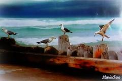 Postal... (MariaTere-7) Tags: pais aves postal caracas venezuela mariatere7 paisaje