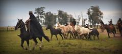 Pechando a invernia (Eduardo Amorim) Tags: gaúcho gaúchos gaucho gauchos cavalos caballos horses chevaux cavalli pferde caballo horse cheval cavallo pferd cavalo 馬 حصان 马 лошадь ঘোড়া 말 סוס ม้า häst hest hevonen pampa campanha fronteira santavitóriadopalmar riograndedosul brésil brasil sudamérica südamerika suramérica américadosul southamerica amériquedusud americameridionale américadelsur americadelsud άλογο brazil eduardoamorim