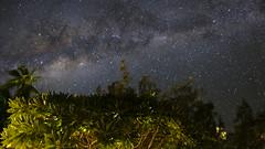 Starry night at Ile des Pins (hubert Prometeo) Tags: milkyway isleofpines newcaledonia xpro2 16mm night longexposure palmtrees nature stars starrynight nightphotography fuji