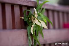 """adam zyworonek fotografia lubuskie zagan zielona gora • <a style=""""font-size:0.8em;"""" href=""""http://www.flickr.com/photos/146179823@N02/35325381405/"""" target=""""_blank"""">View on Flickr</a>"""