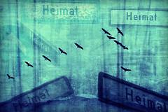 The Inner Compass (Home) (thewhitewolf72) Tags: heimat suche kompass orientierung reise weg zugvögel collage wegweiser verwirrung himmel ziel