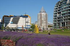 Grote Markt (Arco Ardon) Tags: nederland netherlands rotterdam grotemarkt