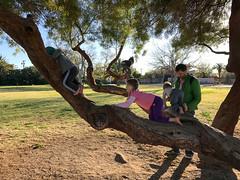 20170301_Shannon_phone_0001.jpg (Ryan and Shannon Gutenkunst) Tags: samhughesfamilynetwork carsongutenkunst sylvia treeclimbing bob tommy himmelpark codygutenkunst