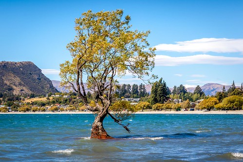 That Wanaka Tree-6