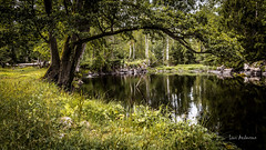_61A4213.jpg (fotolasse) Tags: stenfors natur nature sweden sverige småland kronoberg å vatten water river bäck sten grönt green canon hdr 16x9 tingsryd