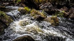 _61A4221.jpg (fotolasse) Tags: stenfors natur nature sweden sverige småland kronoberg å vatten water river bäck sten grönt green canon hdr 16x9 tingsryd