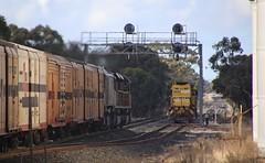 SCT010 SCT011 and BK002 race past NR119 at the down end of Diapur loop (bukk05) Tags: nr119 railpage:class=37 railpage:loco=nr119 rpaunrclass rpaunrclassnr119 sct010 sct011 bk002 nrclass sct sctlogistics sctclass bkclass specialisedcontainertransport wimmera world westernstandardgaugeline winter wagons explore export engine emd electromotivediesel railway railroad railpage rp3 rail railwaystations railwaystation train tracks tamron tamron16300 trains photograph photo pn pacificnational loco locomotive horsepower hp ge ge7fdl16 flickr freight diesel diapur station standardgauge sg australia artc zoom canon60d canon cv409i victoria vr victorianrailway vline victorianrailways 2017 nr mainline nationalrail am9 mtu20v4000r43lefi emd16710g3ces gt46cace